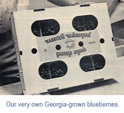 georgia-grown-blueberries